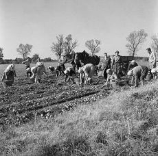 landwirtschaft im 19Jahrhundert