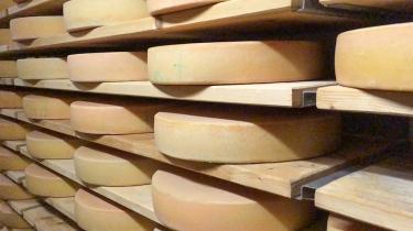 Die wichtigste Zutat: Käse! ...hier Bergkäse bei der Reifung